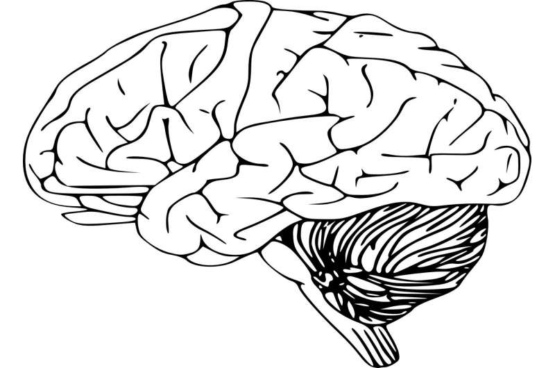 The 'Mozart effect' shown to reduce epileptic brain activity, new research reveals