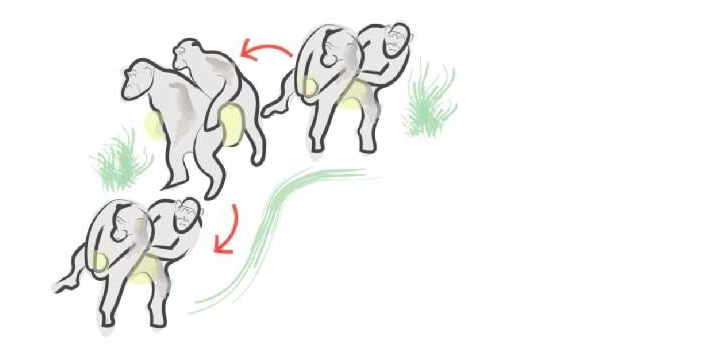 How humans learnt to dance; from the Chimpanzee Conga