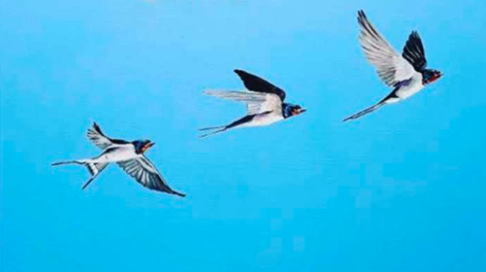 Vastu Tips: Picture of flying birds in the house increases confidence and morale