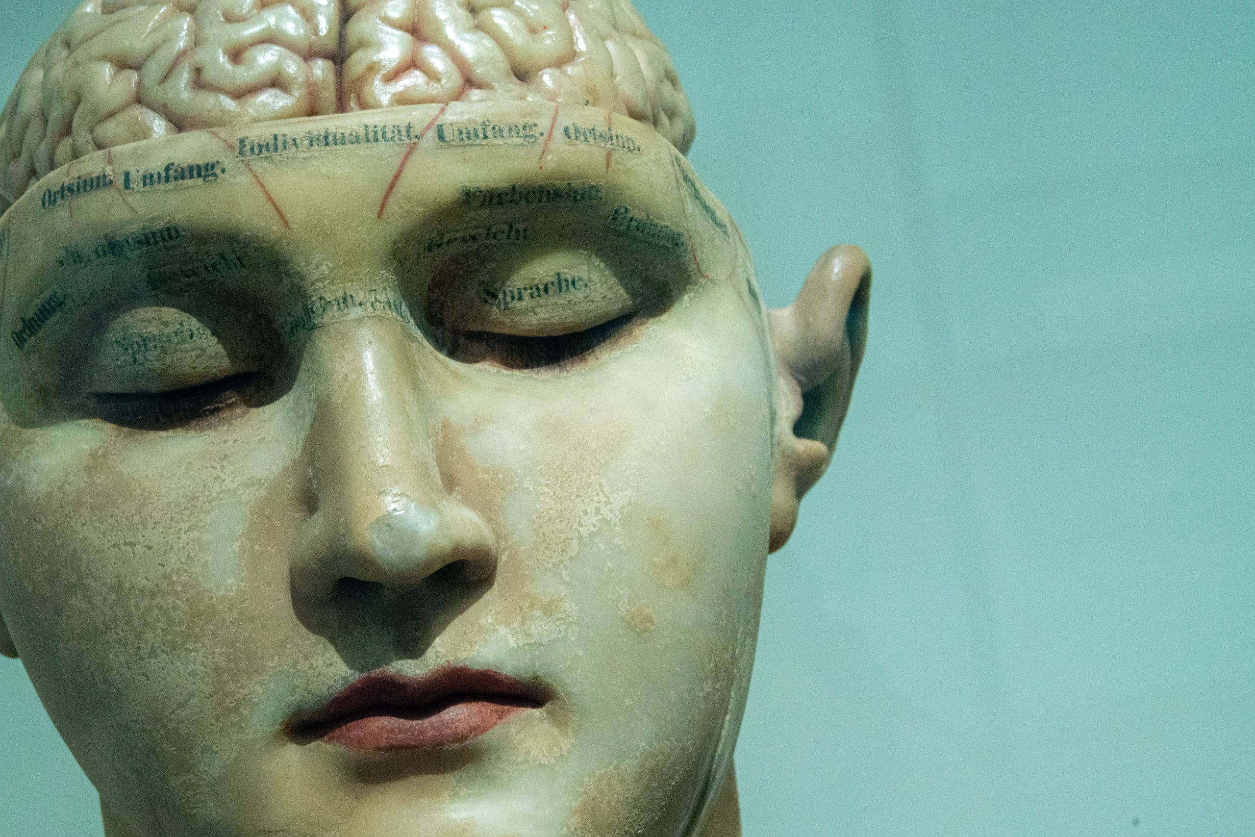 Why the language-ready brain is so complex