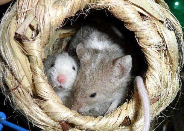 Eyes wide shut: How newborn mammals dream the world they're entering